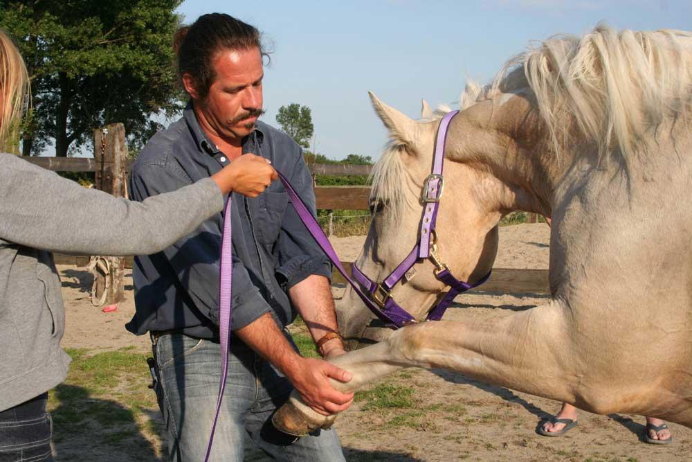Paardenchiropractie_0.jpg