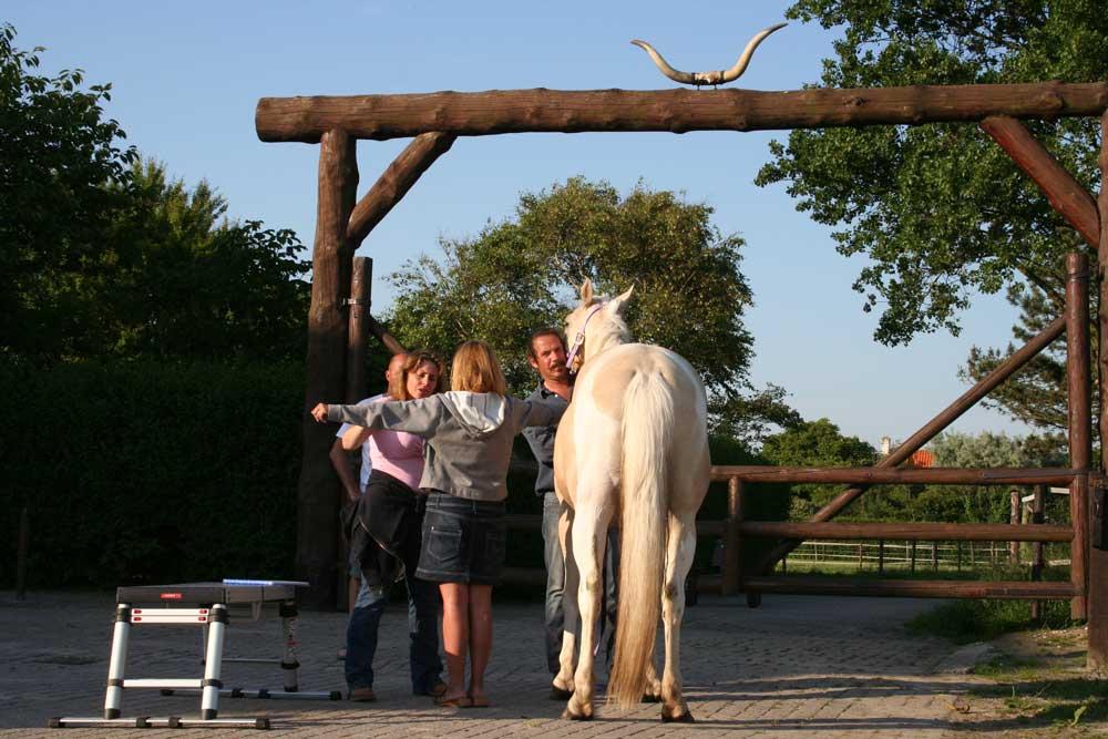 Paardenchiropractie_6.jpg