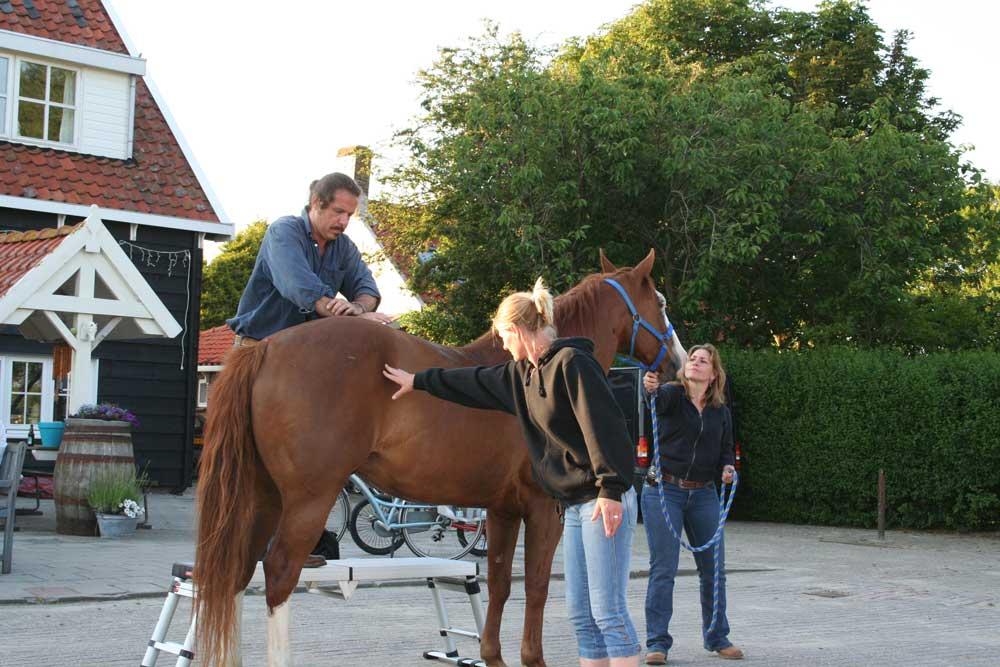 Paardenchiropractie_8.jpg